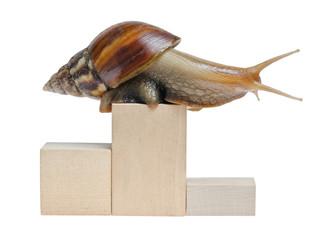 Snail on podium