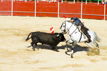 Foto op Canvas Stierenvechten Bullfight on horseback. Typical Spanish bullfight.
