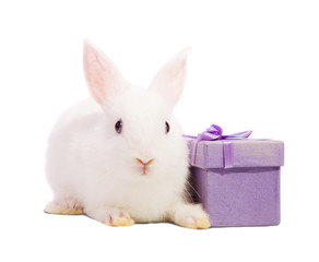 rabbit with present box