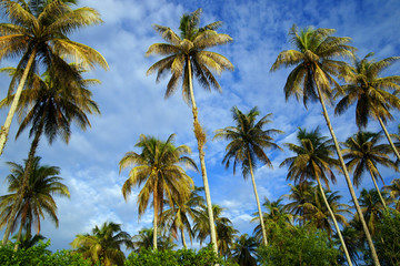 The coconut sky of peninsula Santubong. Borneo.