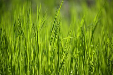 фон зеленой молодой травы
