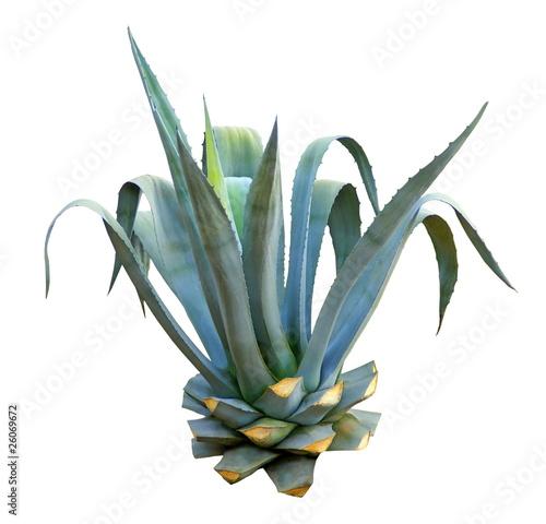 Plantes étonnantes (ou belles ou intéressantes ou marrantes ou ce que vous voulez) - Page 2 500_F_26069672_bhYbWcvlgaAbkTzfctQyi9dpzvy6eYm6