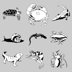 reptiles and amphibians vector