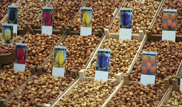 Mercado de bulbos