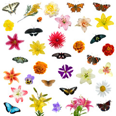 Large set of butterflies and flowers