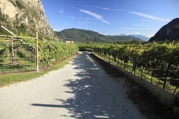 Strasse im Weinanbaugebiet