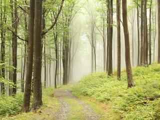 Keuken foto achterwand Bos in mist Path through foggy early autumn forest