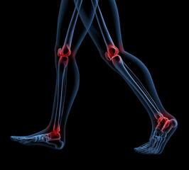Skeleton of legs walking