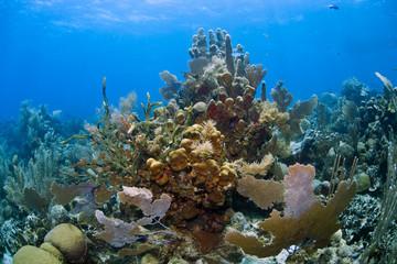 Underwater coral gardens
