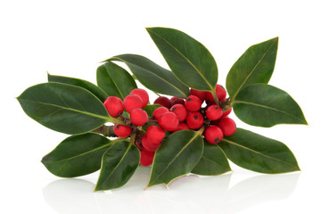 Holly Berry and Leaf Sprig