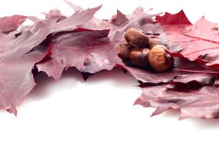 Blätter und Kastanien