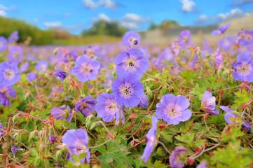 Blumen 167