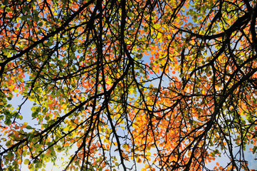 Fall colored leaves background