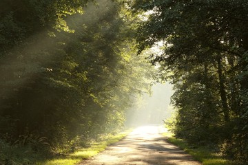 Sunlight falling on the rural road in misty forest