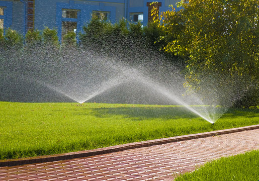 sprinkler of automatic watering in garden
