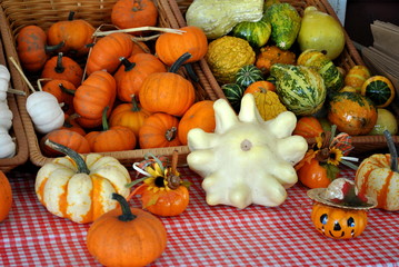 Selling Pumpkins and Gourds