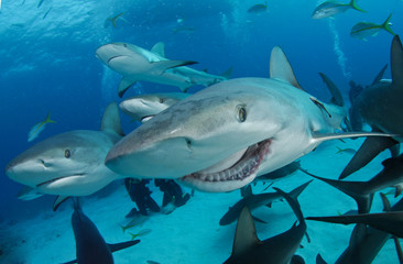 Reef shark with broken jaw, smile