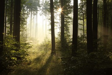 Keuken foto achterwand Bos in mist Sunbeam falls into misty spring forest