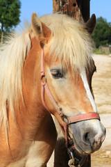 Ritratto di un pony