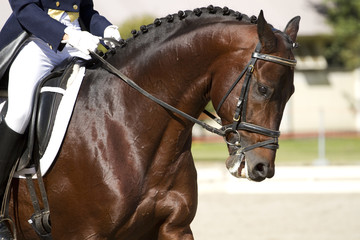 horse dressage outdoors