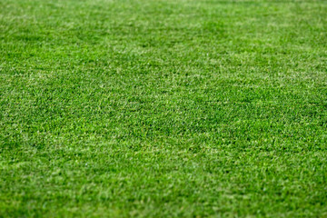 Bright green grass background, shallow DoF