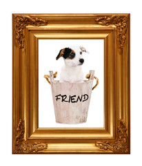 Poster Jack Russell Terrier
