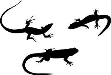 lizards silhouette collection vector