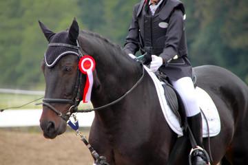 Dressurpferd mit Reiterin