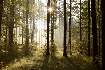 Sunbeams entering into forest on a misty morning