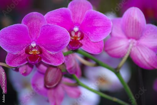 Orqu deas flores ex ticas floraci n rosa fotos de for Plantas exoticas online