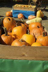Pumpkin Season 2