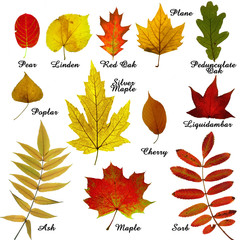 Autumn leaves collection -3