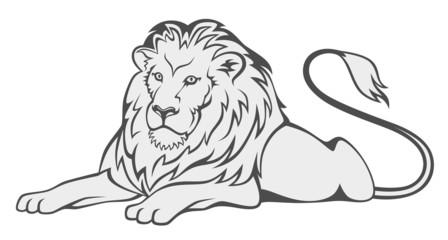 grey lion