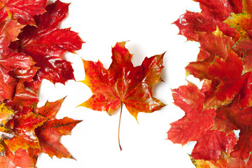 Flag of Canada, built from maple leaves