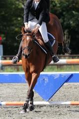 saut d'obstacles en équitation