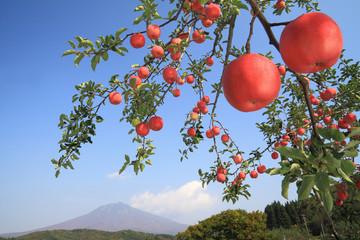 りんごと岩木山