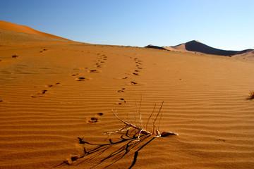 Footprints in Namib Desert in Namibia (Soussusvlei)