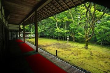 大徳寺 高桐院 庭園