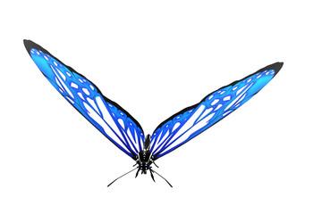Papillon bleu isolé sur fond blanc