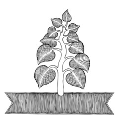 plant woodcut