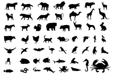 Animal black silhouettes