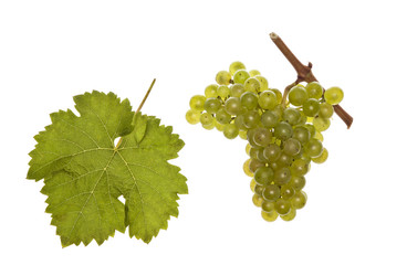 leaf and grapes of white kerner
