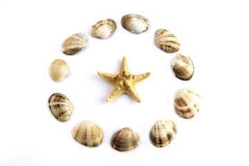 sea shell and sea star
