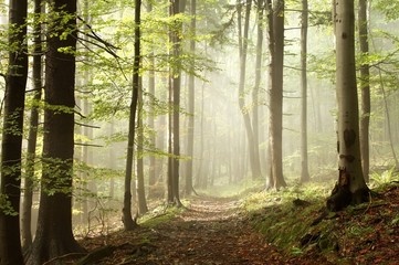 Keuken foto achterwand Bos in mist Path in the autumn woods in the sunshine after a rainfall