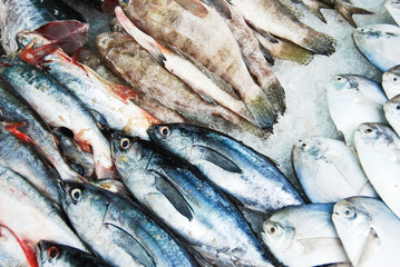 Many kind of fish in Thailand fresh market
