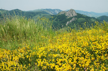 Landscape with yellow flowers and blue sky