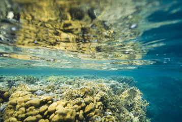 Shallow and colorful tropical coral reef.