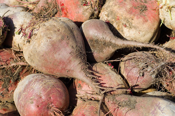 beets on field
