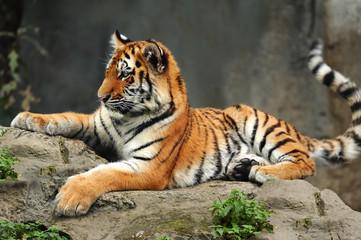 Zoo 167