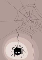 Spider in cobweb